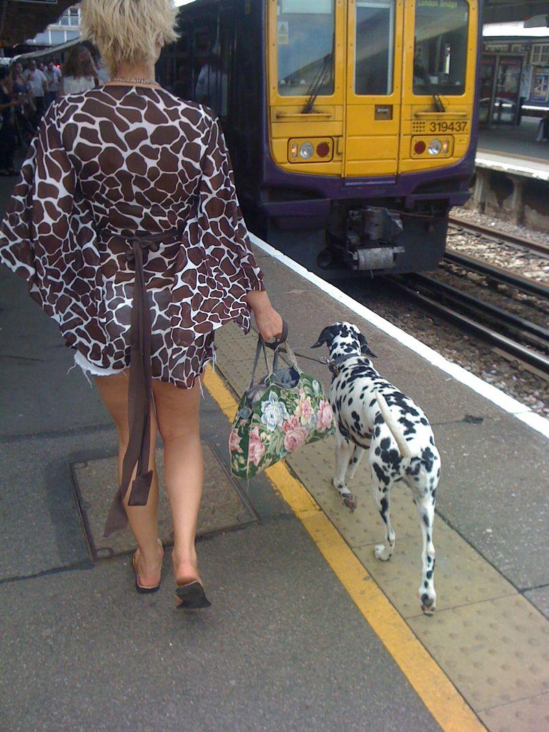 Giraffe-floral-dalmatian