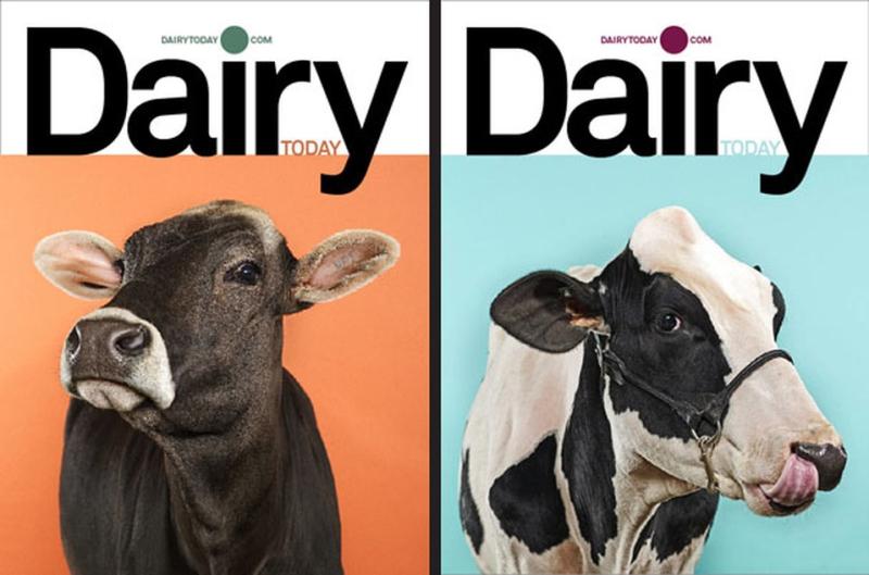 Dairy dj stout